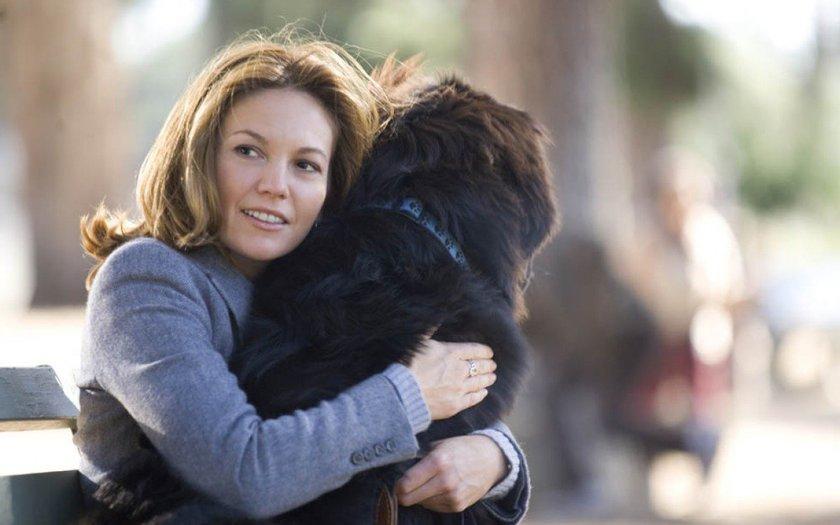 Procura-se um Amor Que Goste de Cachorros (2005)