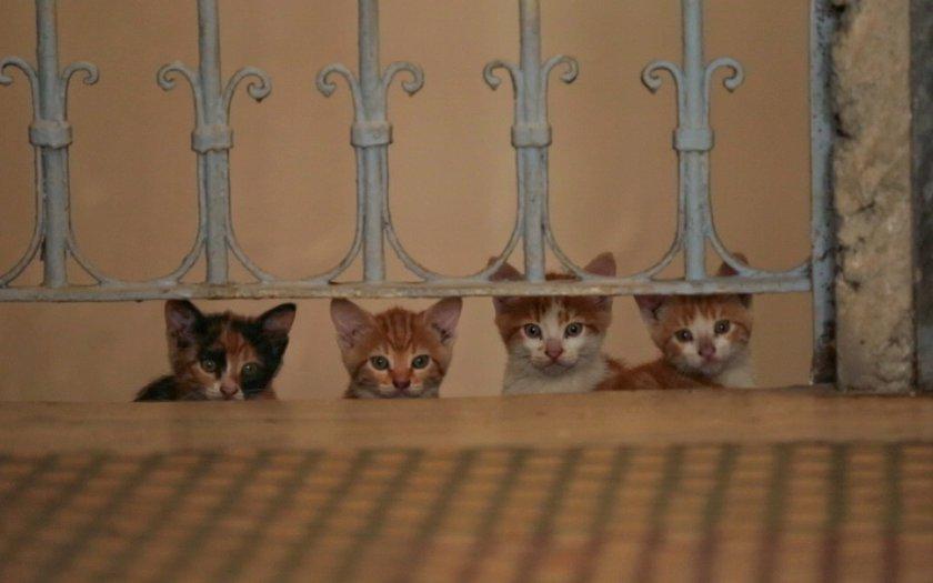 gatos b.jpg