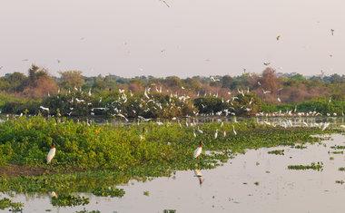Pantanal, Brasil | América do Sul