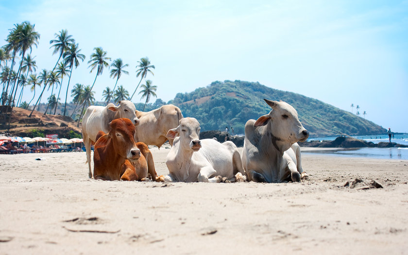 Agonda, Goa | Índia