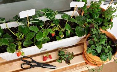10 dicas para fazer uma hortinha em casa
