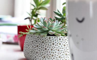 Decoração verde: 5 plantas ideais para ter em seu apartamento