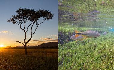 Parque Nacional das Emas, em Goiás, é opção de viagem para toda a família