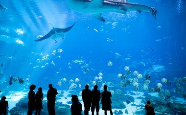 7 zoológicos e aquários ao redor do mundo para visitar online