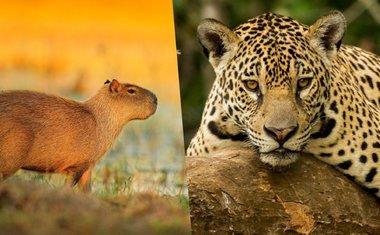 10 iniciativas para ajudar o Pantanal em chamas