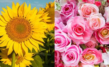 De Orquídea a Girassol, conheça as flores da Primavera