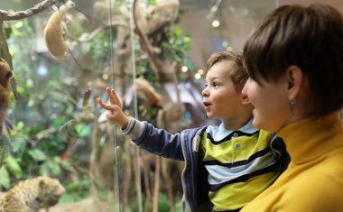 Conheça 3 museus virtuais sobre a vida animal