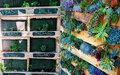 Pallet em casa: 10 maneiras originais de usar o item na decoração