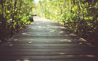 TRILHA MAIS LEVE: Trilha da Vida (Parque Ecológico do Guarapiranga)