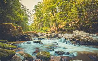 TRILHA MAIS LEVE: Trilha Cachoeira do Sagui, Fazenda Maravilha