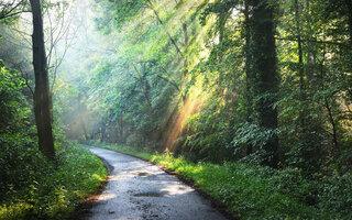 TRILHA MAIS LEVE: Trilha da Figueira, Parque Estadual da Cantareira