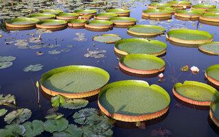 Jardim Botânico de Manaus Adolpho Ducke