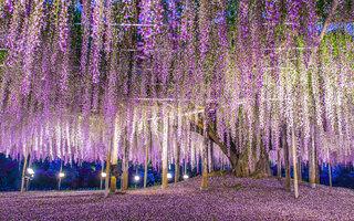 Parque de Flores Ashikaga, Tochigi | Japão