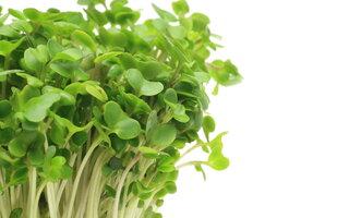 Broto de brócolis