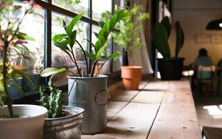 Replantio de plantas