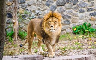 Zoológico de Maryland