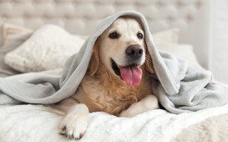 Aprenda a lidar com o latido do cão