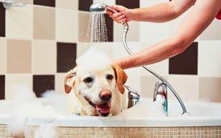 Cuidado com a quantidade de banhos