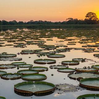 Viagens Nacionais: Pantanal é destino perfeito para quem gosta de natureza selvagem; conheça atrações imperdíveis