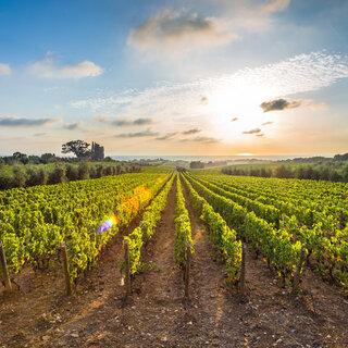 Viagens Nacionais: 1ª Corrida do Roteiro do Vinho de São Roque