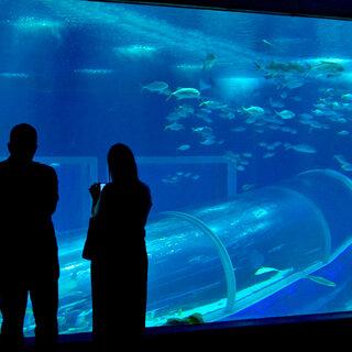 Viagens Nacionais: Saiba quais são os 6 maiores aquários do Brasil