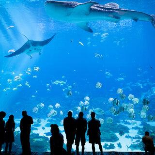 Programação Infantil: 7 zoológicos e aquários ao redor do mundo para visitar online