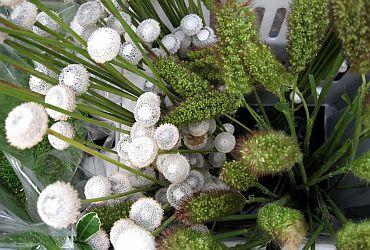 Uemura Flores e Plantas