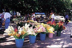 Feira de Flores e Plantas Naturais