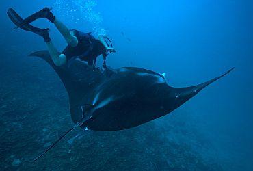Sea Divers - Centro de Turismo Submarino