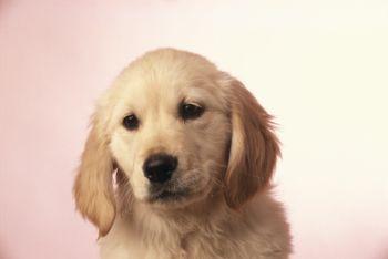 Compras: Cão de Mel Hotel e Veterinária - Butantã