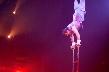 Acrobatic Ladder Corteo