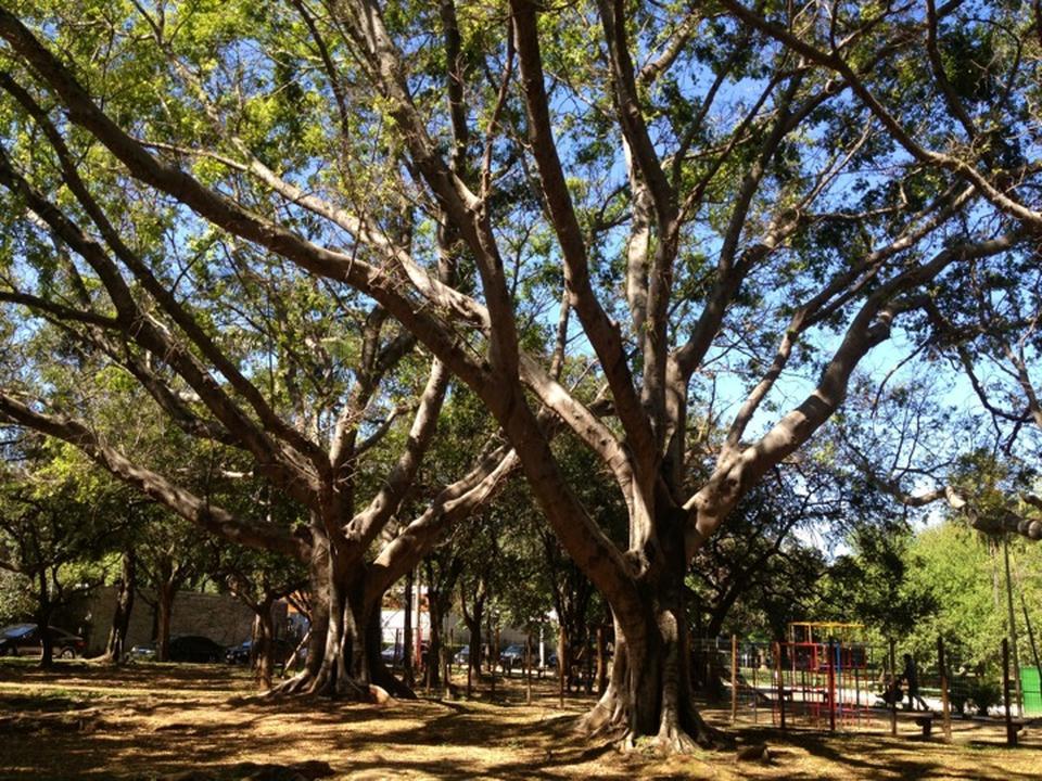 balada de um banco de jardim os azeitonas : balada de um banco de jardim os azeitonas:10 praças para conhecer em São Paulo – Guia da Semana